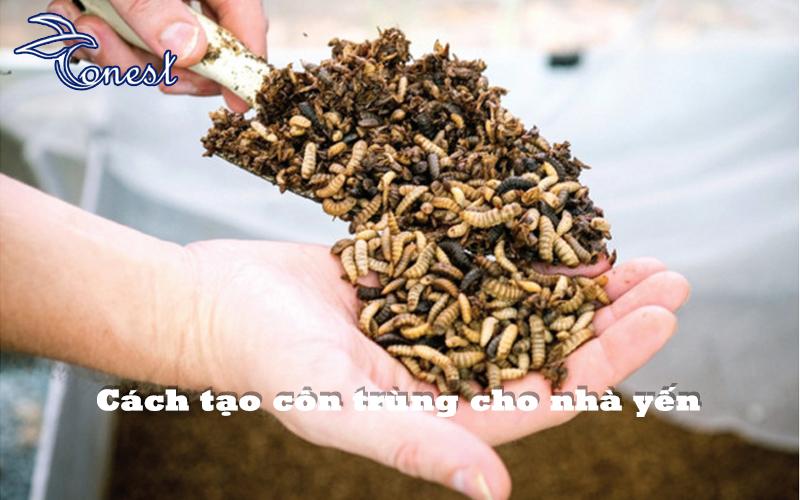 Cách tạo côn trùng cho nhà yến